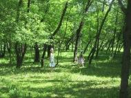 Children Roaming Freely