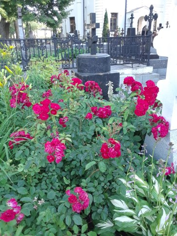 Monastery Flowers