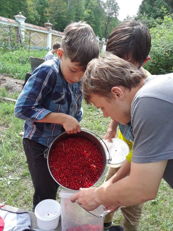 Fresh Picked Berries